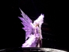 Lady Gaga Performing at the Birmingham LG Arena