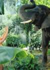 Katy Perry Roar Music Video HD -35