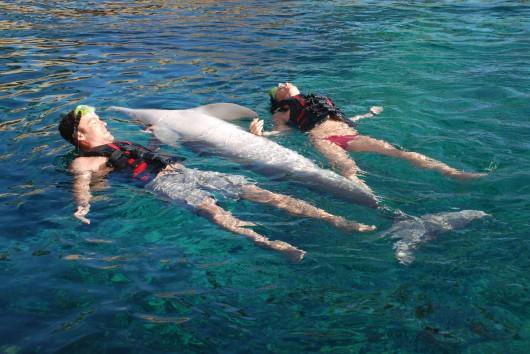 megan-fox-bikini-candids-swimming-with-dolphins-in-hawaii-04
