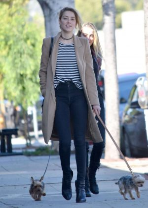Amber Heard with her dogs out in Los Feliz