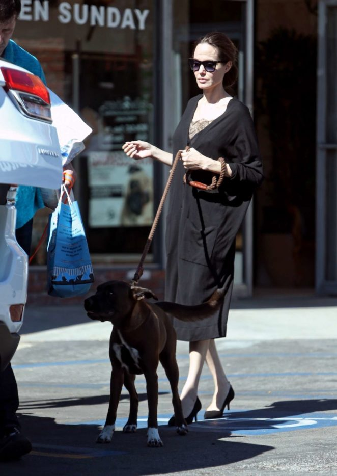 Angelina Jolie – Takes her dogs to the pet store -10
