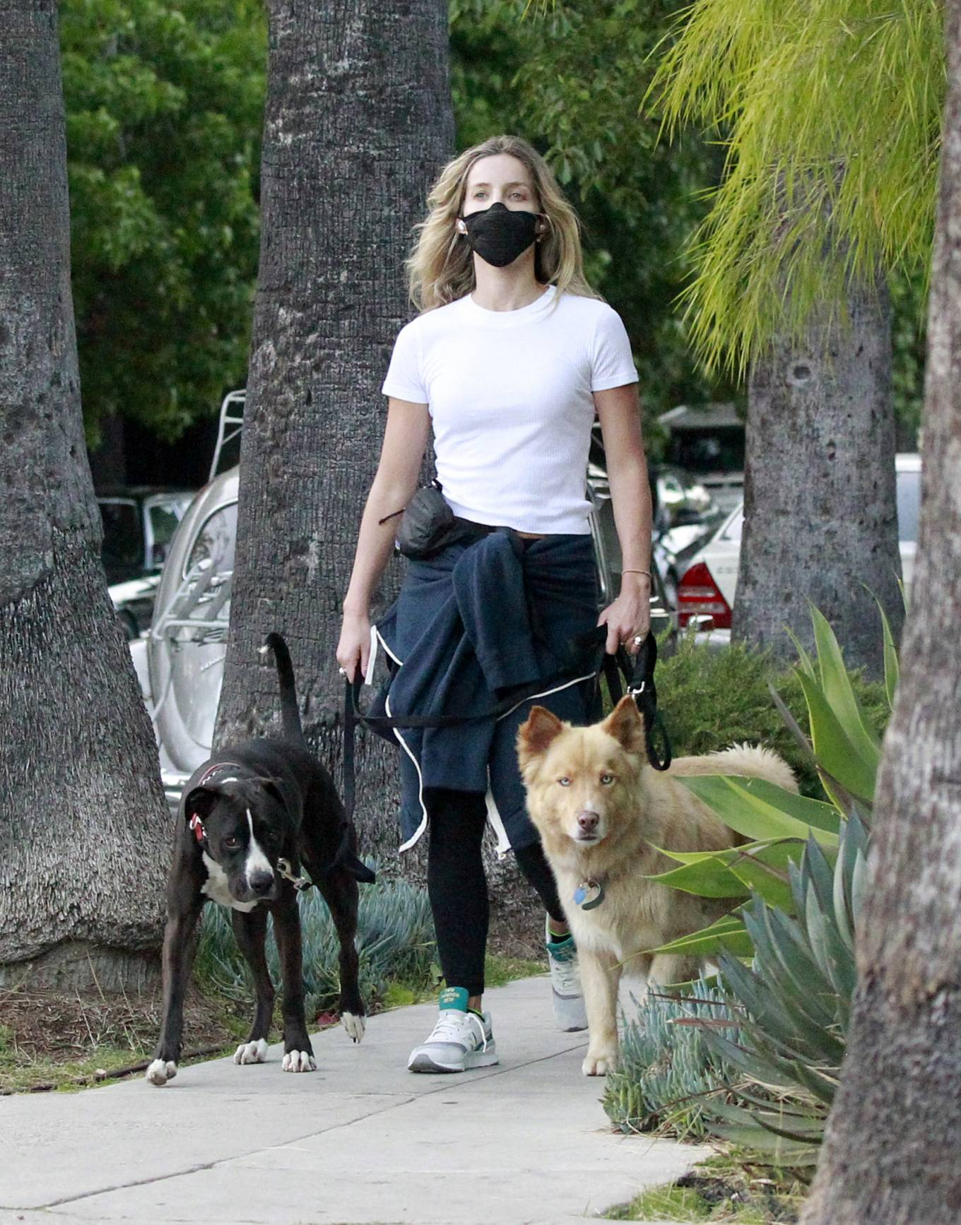 Annabelle Wallis - Jogging with her dogs in Los Angeles