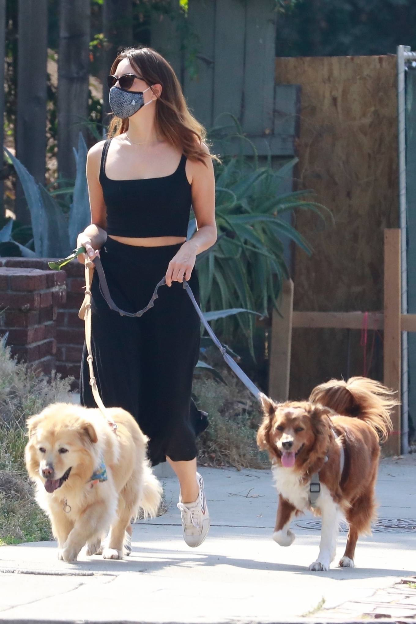 Aubrey Plaza - Spotted while walking her dogs in Los Angeles