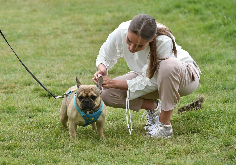 Chloe Ross 2020 : Chloe Ross – Walk her dog in Essex-03