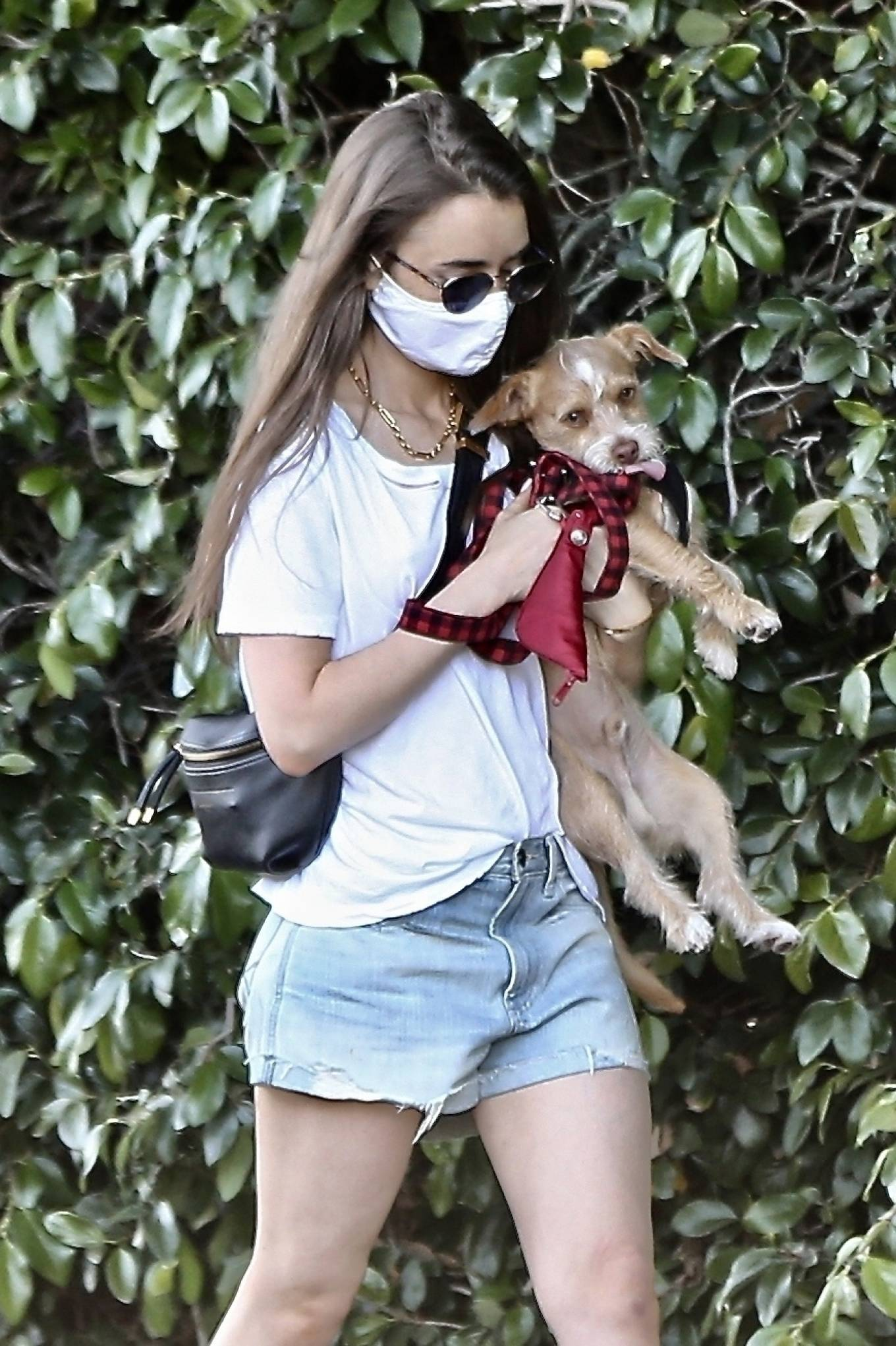Lily Collins - Taking her beloved dog Redford for a walk in Beverly Hills