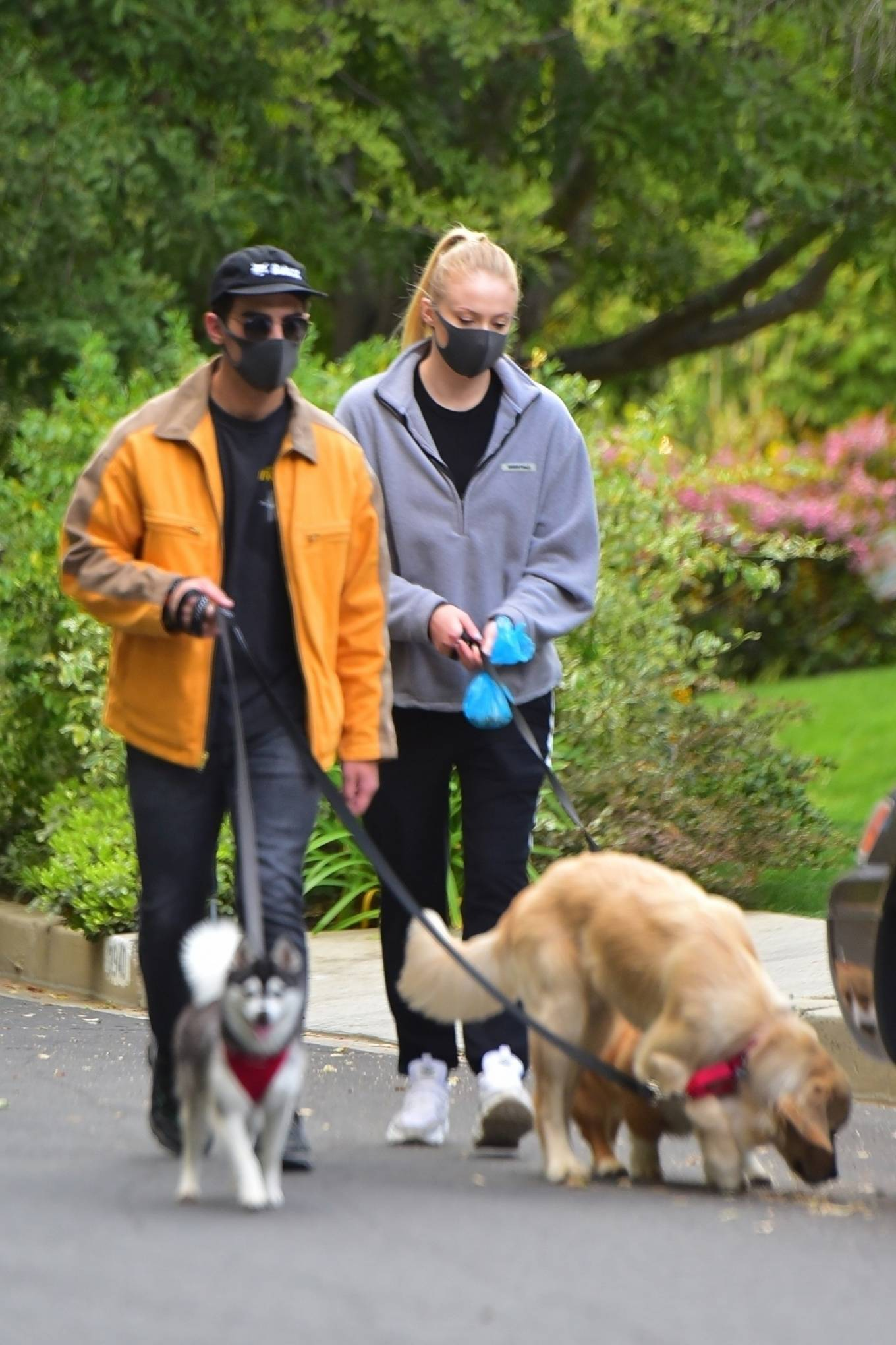 Sophie Turner - Take her dogs out for a walk in Los Angeles